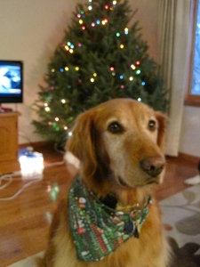 Tanner being cute as always when we decorated the tree on 11/30.