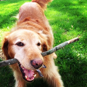 One last picture, because my dog is adorable and loves sticks.